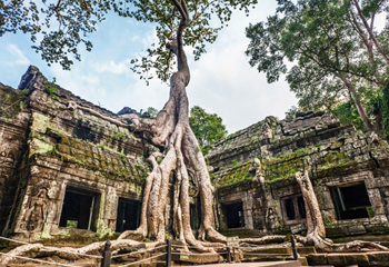 Ta Prohm Temple (Tomb Raider)